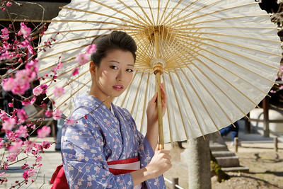 Young Japanese in Kimono with Parasol  Looking at Plum Blossoms on Temple Ground