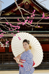 Beautiful Woman with Kimono  Posing with Parasol in Front of a Temple with blossoms