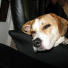 10/11/2009 - Lazy Sadie