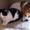 10/10/2011 - Sadie and Michael