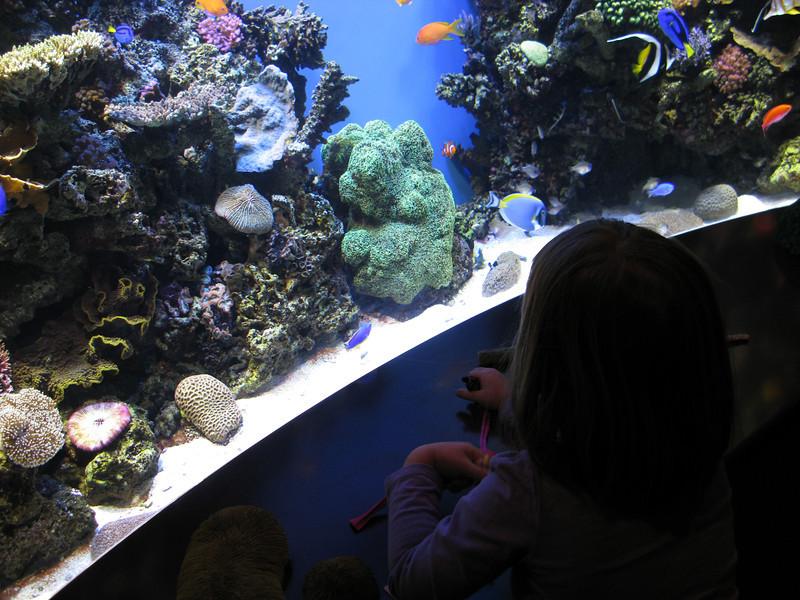 "1/16/2012 - The ""Finding Nemo"" tank."