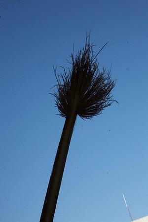 Adrea: Karden Shake Tree Horribly unedited