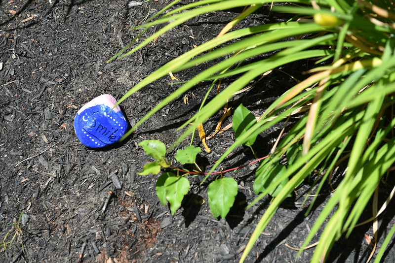 "Madelyn Graves, 11, of Fitchburg, places her rock which reminds those who see it to ""smile"" in the garden behind the Lunenburg Public Library on Monday. SENTINEL & ENTERPRISE JEFF PORTER"