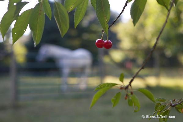 Promise Farm WA (August 2011)