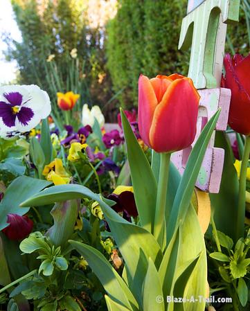 Spring Flowers & Baby Ducks (Spring 2011)