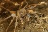 Crab, spider crab<br /> King Harbor, Redondo Beach, Los Angeles County, California