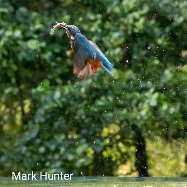 Kingfisher Climbing