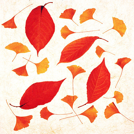 Dried Leaves on Paper