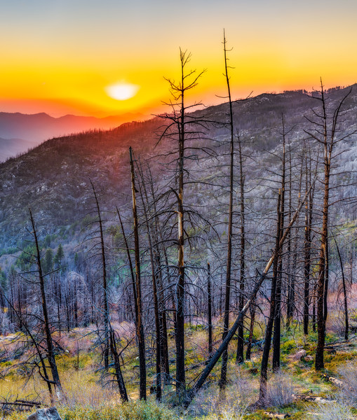 Fire Aftermath - Kings Canyon