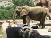 2004 07 10 Hogle Zoo-24