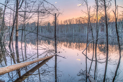 Swamp near corner of Lucas Avenue and Binnewater Road, Kingston/Rosendale, New York