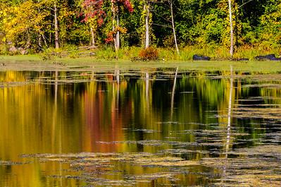 Eddyville Swamp