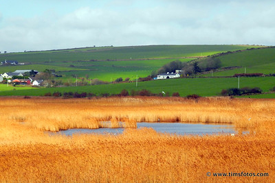 The lake in the Reedbed opposite Garretstown Beach