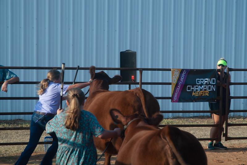 kiowa_county_cattle_jackpot_2020014