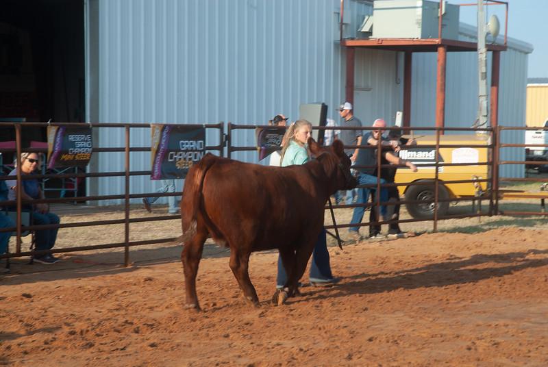 kiowa_county_cattle_jackpot_2020021