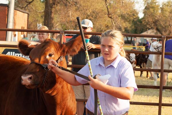 kiowa_county_cattle_jackpot_2020015