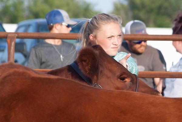 kiowa_county_cattle_jackpot_2020010