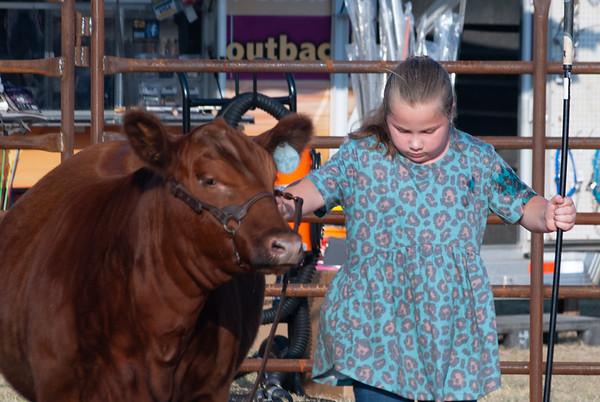 kiowa_county_cattle_jackpot_2020004