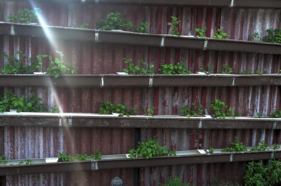 Walled Garden1