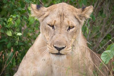 Kisa Safaris Uganda