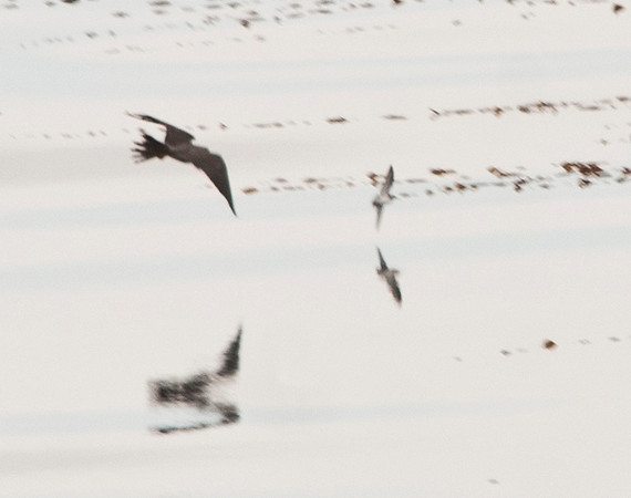 Chased a small bird but missed every time.<br /> Too far away to get a better image.