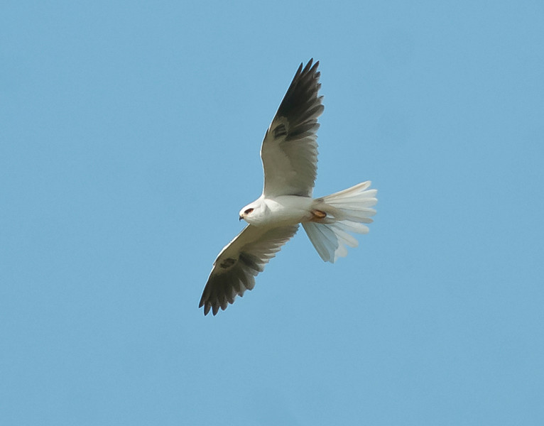 These are all the birds I was able to photograph.  There were 51 species recorded on this day.