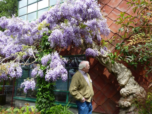 Mike and the Wisteria