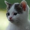 Kitten Picture