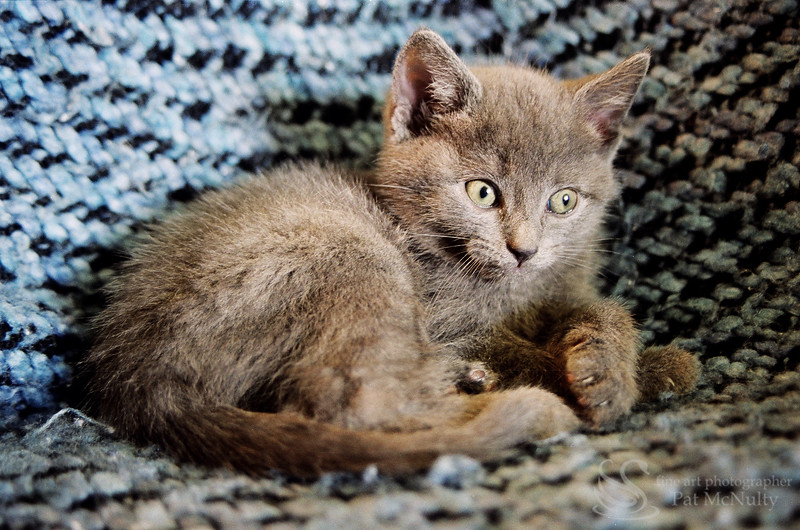 Grey Kitten on Blanket Picture
