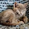 Grey Kitten on Blanket Picture