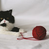 Black & White Kitten with Yarn Photo