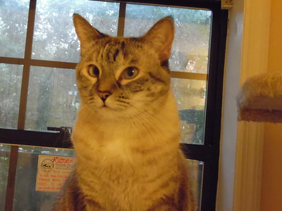 Kittens/Cats 9/12/2015