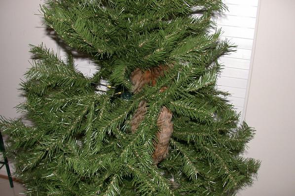 Classic Cleo Christmas Climbing: December 2002