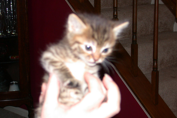 PocoCletus: Our First Day with Cleo
