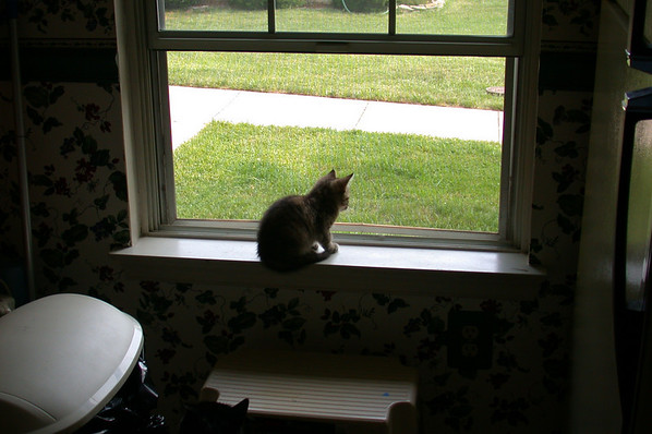 Young Cleo in the Window: June 2002