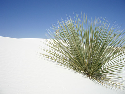 grass at White Sands