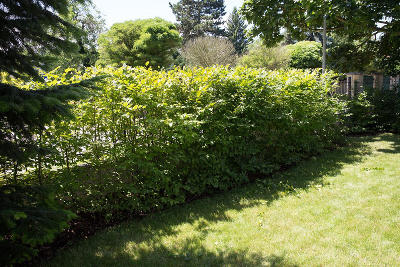 Živý plot habr 4 roky