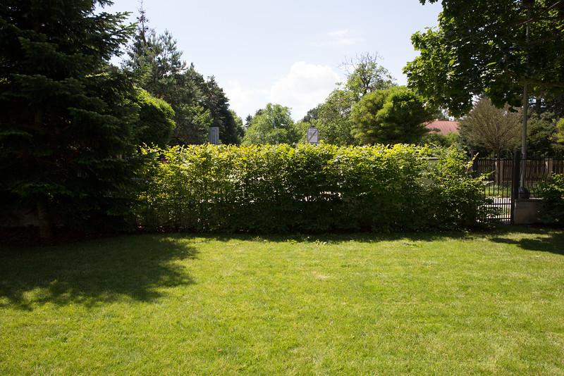 Živý plot habr