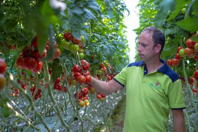 Tomaten Krikato BVBA