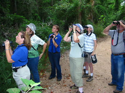 Looking for birds; we found a pair of Summer tanagers, Black & White warbler, and a Hooded Warbler