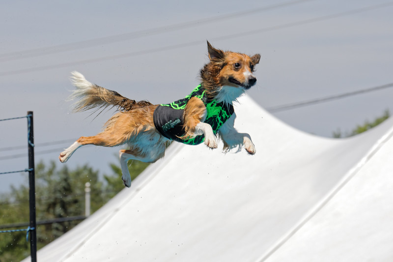 A three day dockdog event was held at Klem's in Spencer MA on July 19-21. Despite the temperatures in the high 90s all three days, it was well attended and both dogs and handlers had a great time.