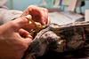 Cutting Steek 7--using magic stork scissors.
