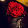 A rose at dinner. © Sugar + Shake