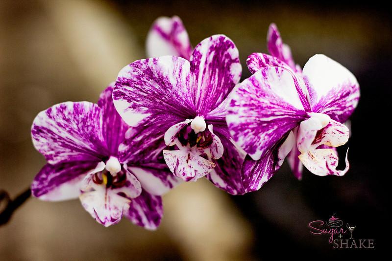 Orchids. © 2012 Sugar + Shake
