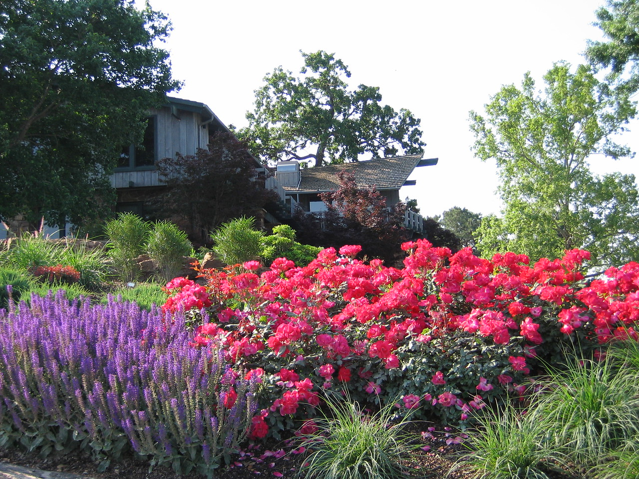 Knock Out® Rose PP11836 http://www.greenleafnursery.com/index.cfm/fuseaction/plants.plantDetail/plant_id/3751/index.htm