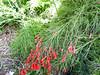 Flower, orange-red