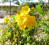 Flower, yellow