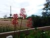 Flower, red