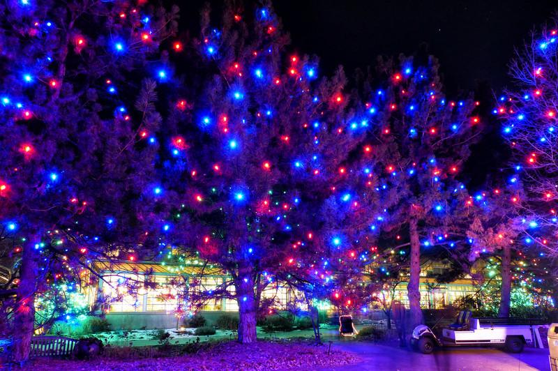 Denver Botanic Gardens, Blossoms of Light, Christmas 2013