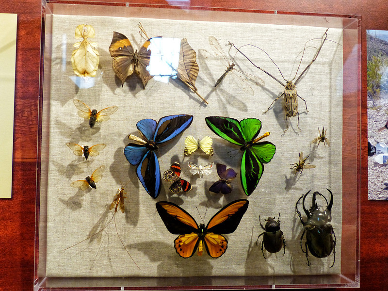 Those who know us well know we have a soft spot for bugs. The specimens are excellent.